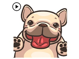 Animated Funny French Bulldog
