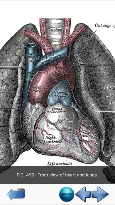 Screenshot for Visual Anatomy in Denmark App Store