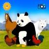 Find Them All: Animal World Ranking