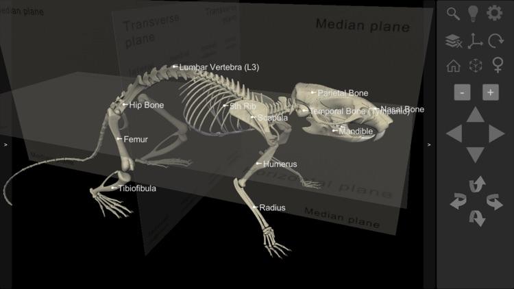 3D Rat Anatomy screenshot-6