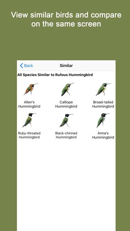 Sibley Guide to Hummingbirds screenshot-4