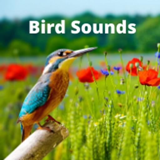 Bird Sounds .