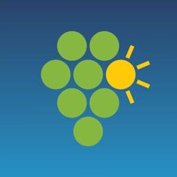 Climate Vine