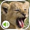 动物叫声:超过100个声音