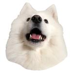 Lovely Samoyed Sticker Pack