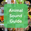 Animal Sound Guide