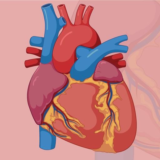 Learn Cardiovascular System