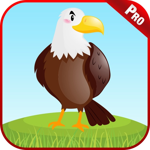 Learn Birds Name For Kids Game