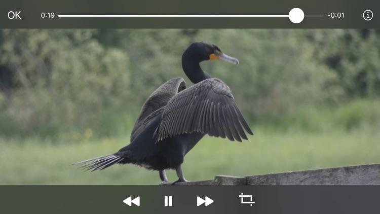 Video Frame Grabber screenshot-3