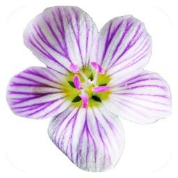 Flora of Virginia