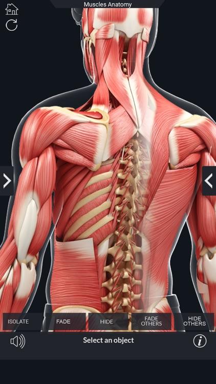 My Muscle Anatomy screenshot-3