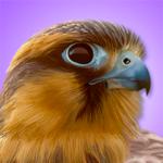 iBird Pro Guide to Birds