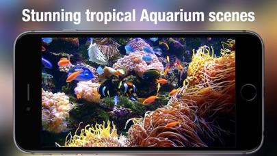 Aquarium Live Hd review screenshots