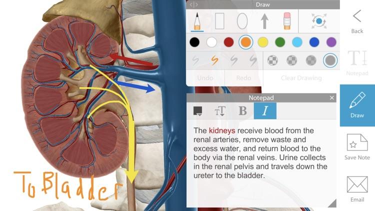Human Anatomy Atlas 2020 screenshot-3