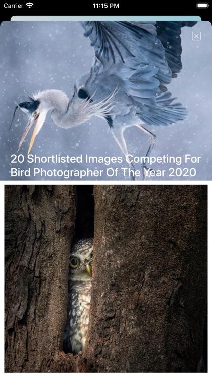 Bird Song/Photo Identification screenshot-7