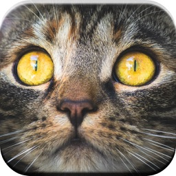 Kitty Cat: Meow Games for Kids