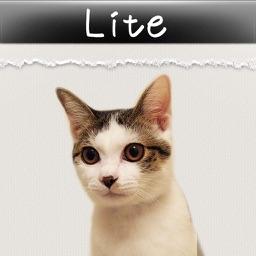かれんにゃーlite 猫の日めくりカレンダー By Potest Co Ltd
