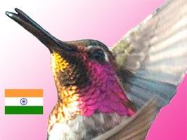 LifeDancing - Hindi
