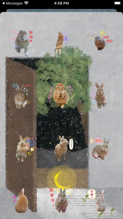 翔不臭之兔