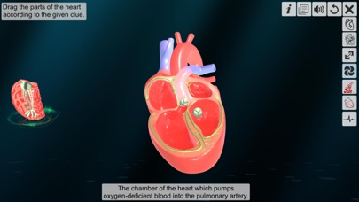 Heart - An incredible pump screenshot 4