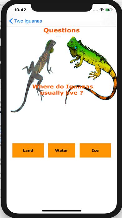 Two Iguanas 4