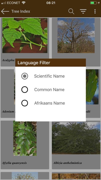 Key to Trees - Southern Africa screenshot-5