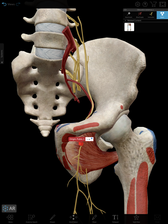 Muscles & Kinesiology Screenshots