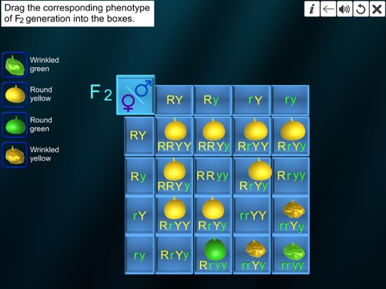 Dihybrid cross screenshot 18
