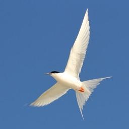 Aust. Birds