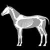 biosphera.org - 3D Horse Anatomy Software artwork