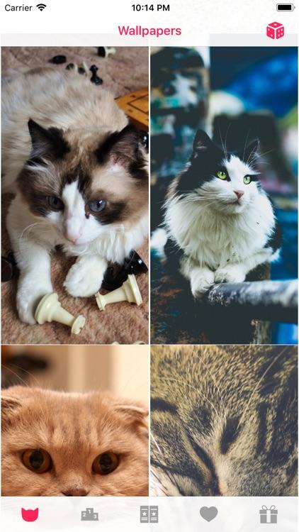 Cat Wallpapers ° screenshot-7