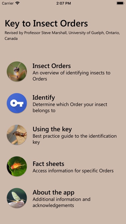 Key to Insect Orders - Revised screenshot-1