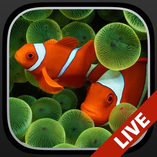 Aquarium Dynamic Wallpapers