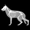 biosphera.org - 3D Canine Anatomy アートワーク