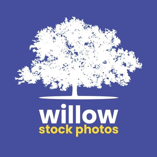 Willow Stock Photos