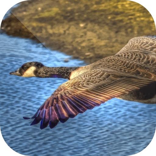 Easy Duck Hunting Calls: Decoy
