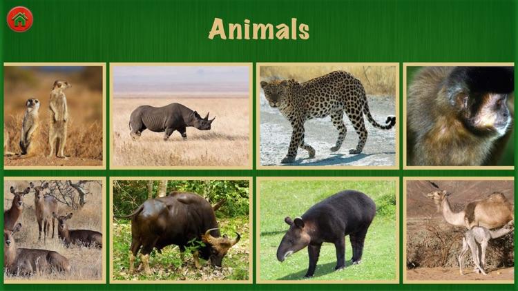 Animal World For Fun