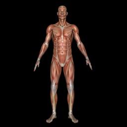 Muscle Patterns