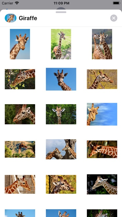 Lotsa Giraffe Stickers screenshot-0