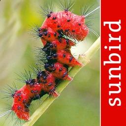 Caterpillar Id USA East Coast