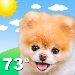 Boo Weather: Pomeranian Puppy