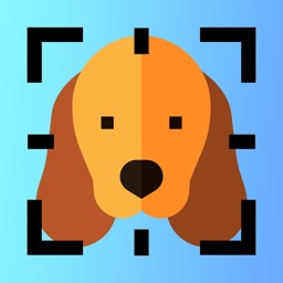 Dog Breed Identifier AI