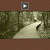 Habit 2 - video