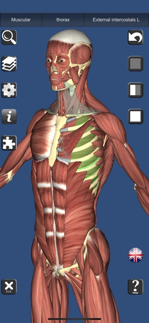3D Anatomy Learning on the App Store