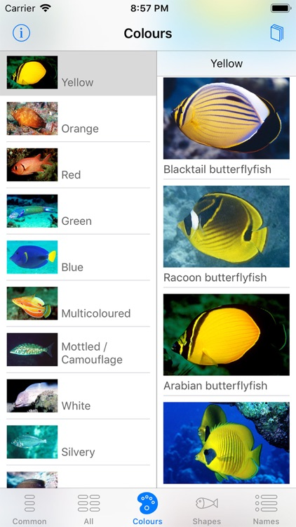 Oman Fish ID screenshot-2