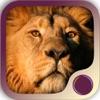 Spirit Animal Power - iPhoneアプリ