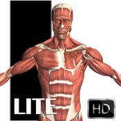 Visual Anatomy Lite icon