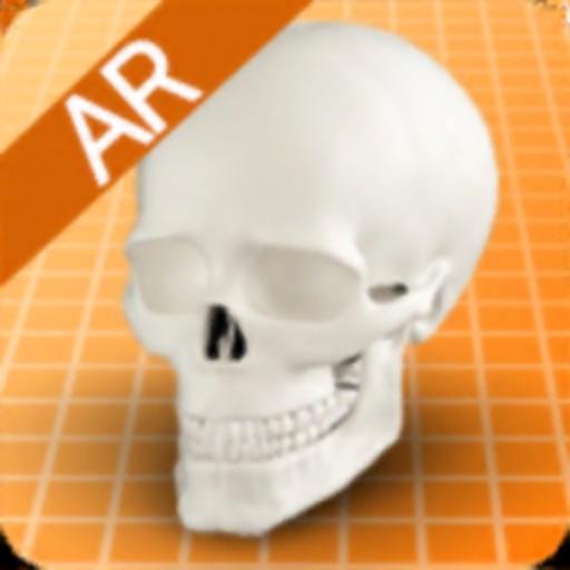 해골의 구조