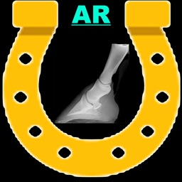 AR Horses Xrays Helper