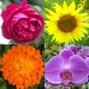 花 - 美しい植物についての植物のクイズ - iPadアプリ